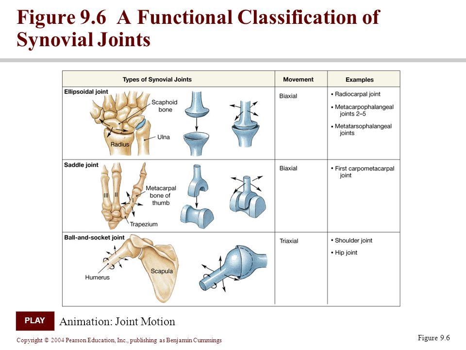 Figure 9.6 A Functional Classification of Synovial Joints