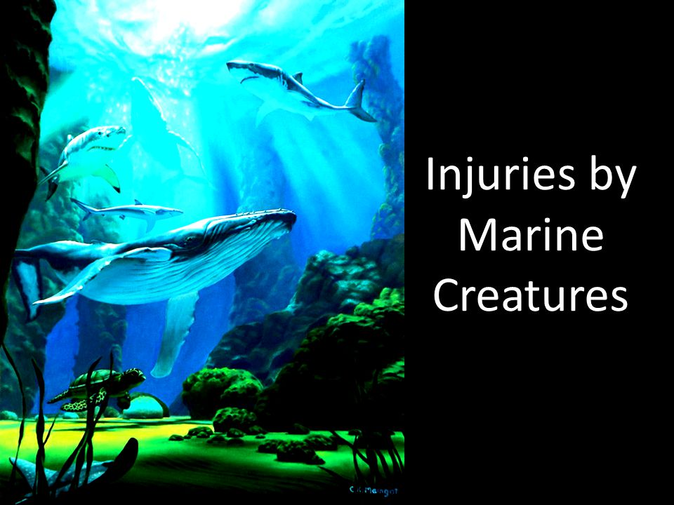 Injuries by Marine Creatures