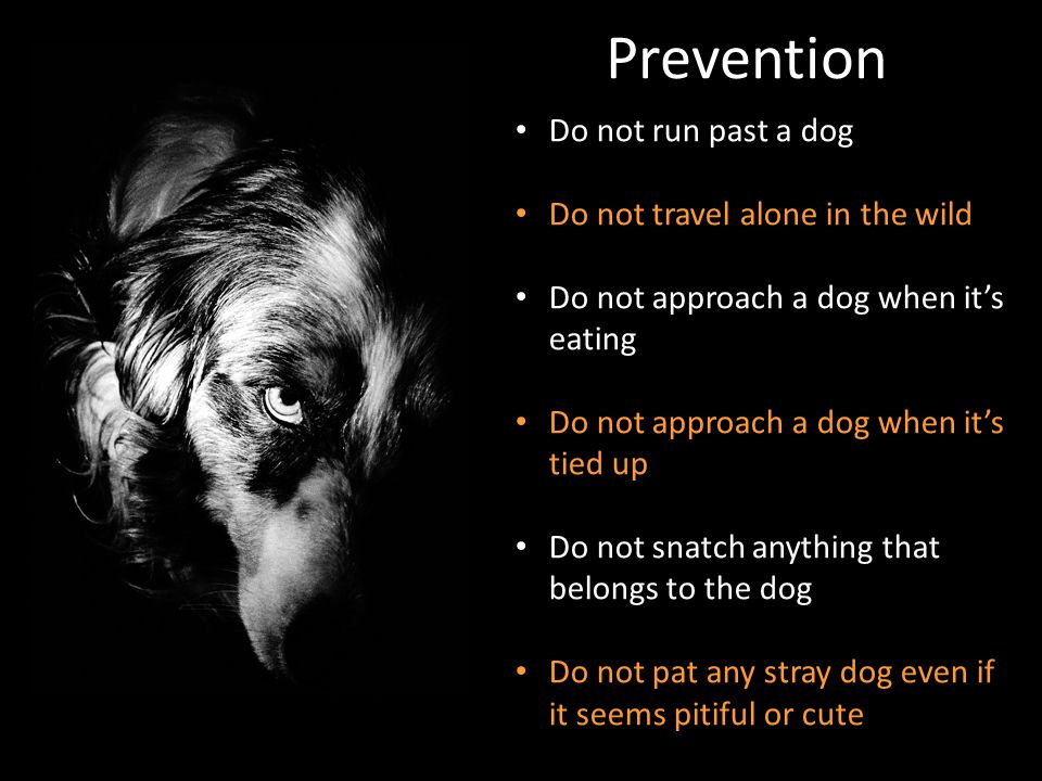 Prevention Do not run past a dog Do not travel alone in the wild