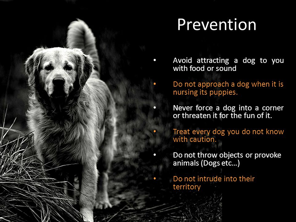 Prevention Avoid attracting a dog to you with food or sound