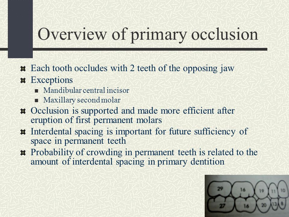 Overview of primary occlusion