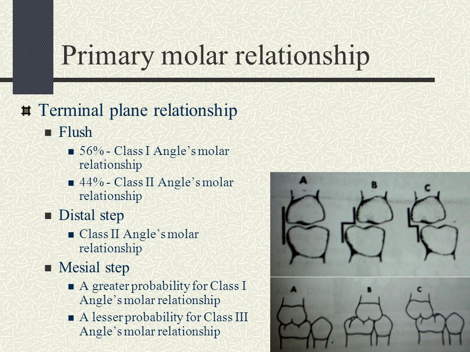 Primary molar relationship