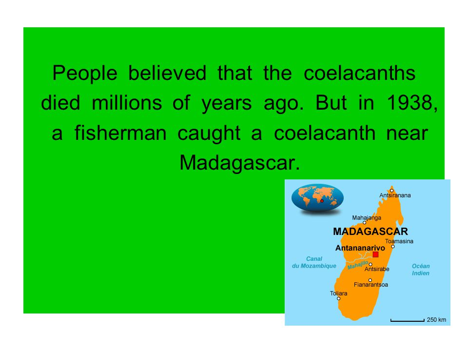 People believed that the coelacanths