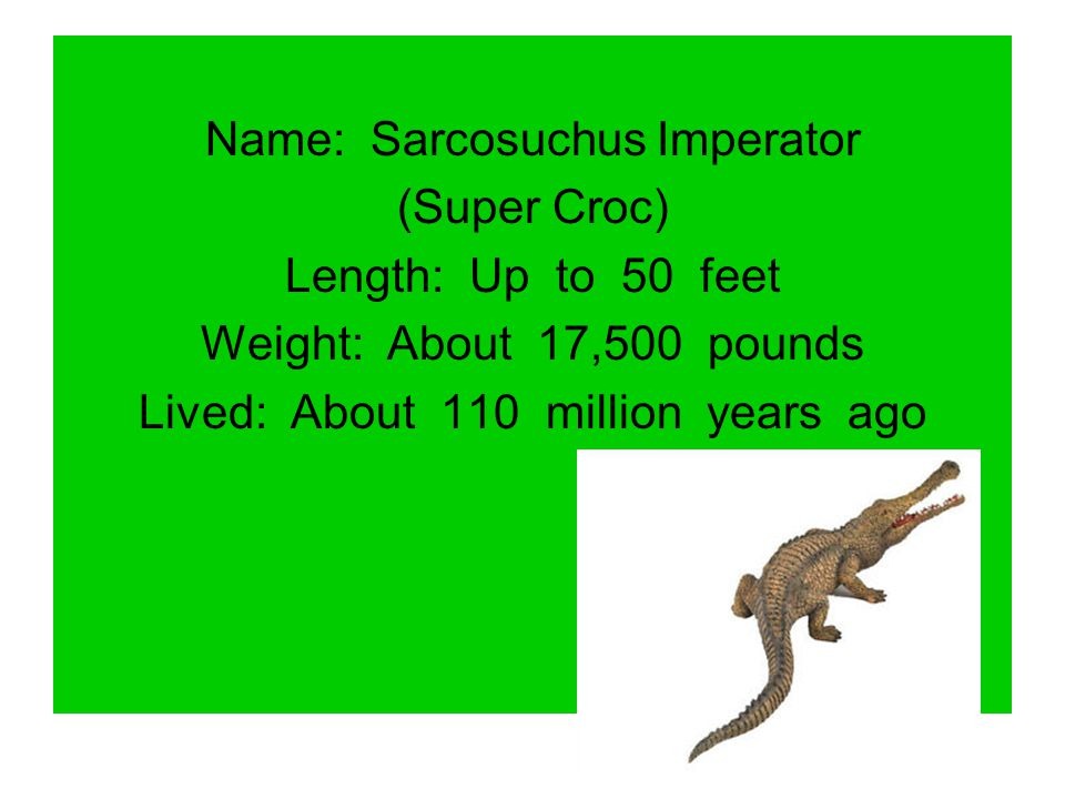 Name: Sarcosuchus Imperator (Super Croc) Length: Up to 50 feet