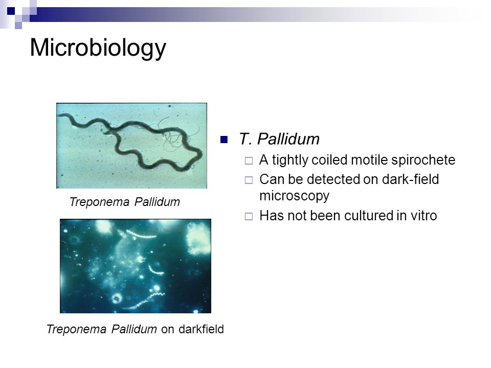Microbiology T. Pallidum A tightly coiled motile spirochete