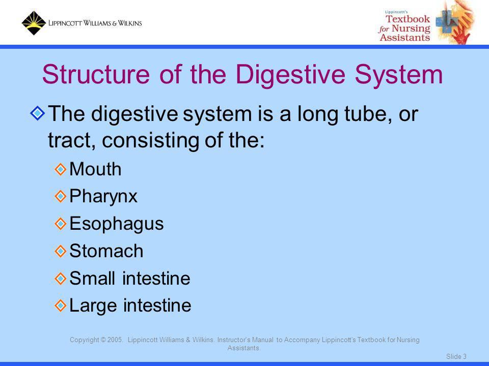 Structure of the Digestive System