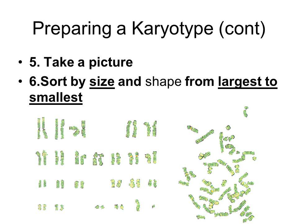 Preparing a Karyotype (cont)