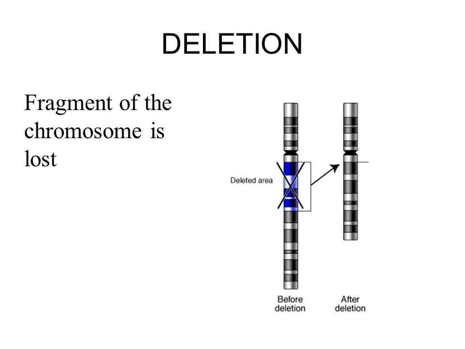 DELETION Fragment of the chromosome is lost