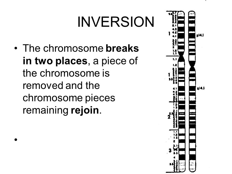INVERSION The chromosome breaks in two places, a piece of the chromosome is removed and the chromosome pieces remaining rejoin.
