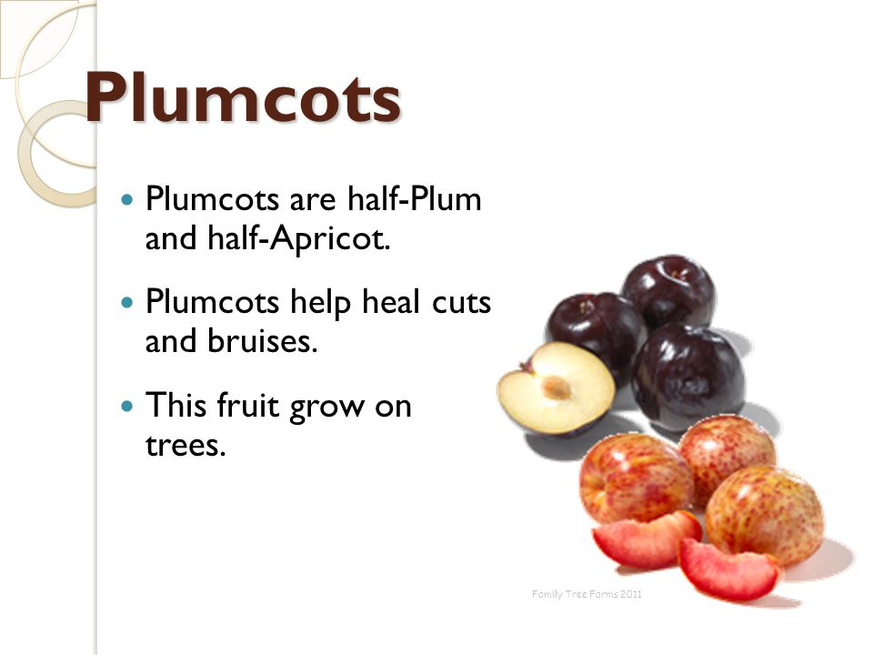 Plumcots Plumcots are half-Plum and half-Apricot.