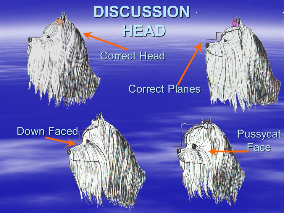 DISCUSSION HEAD Correct Head Correct Planes Down Faced Pussycat Face