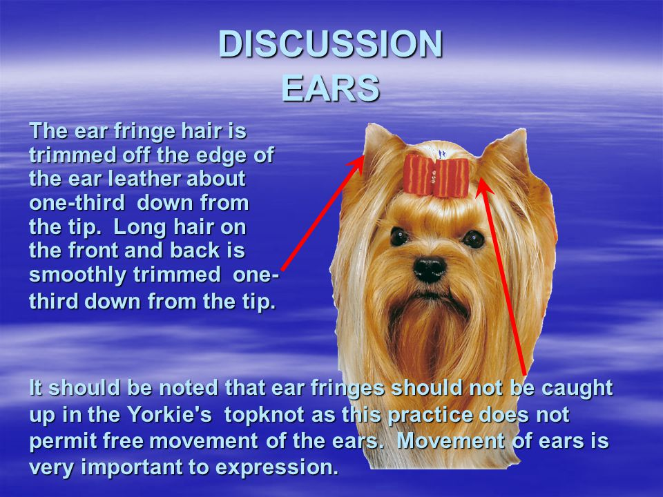 DISCUSSION EARS