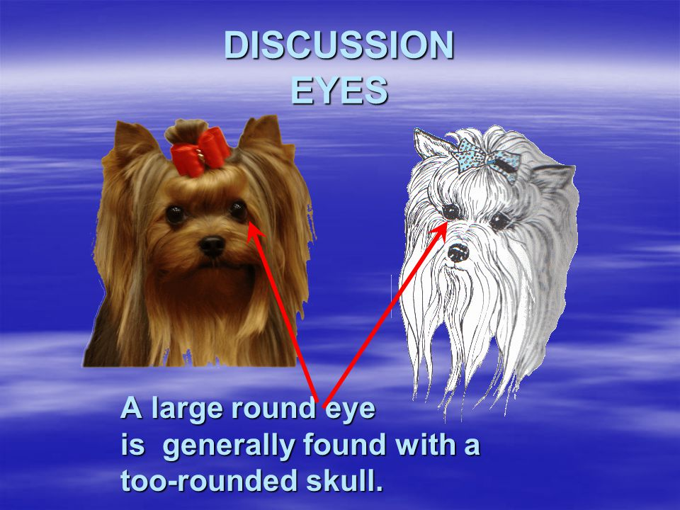 DISCUSSION EYES A large round eye is generally found with a too-rounded skull.