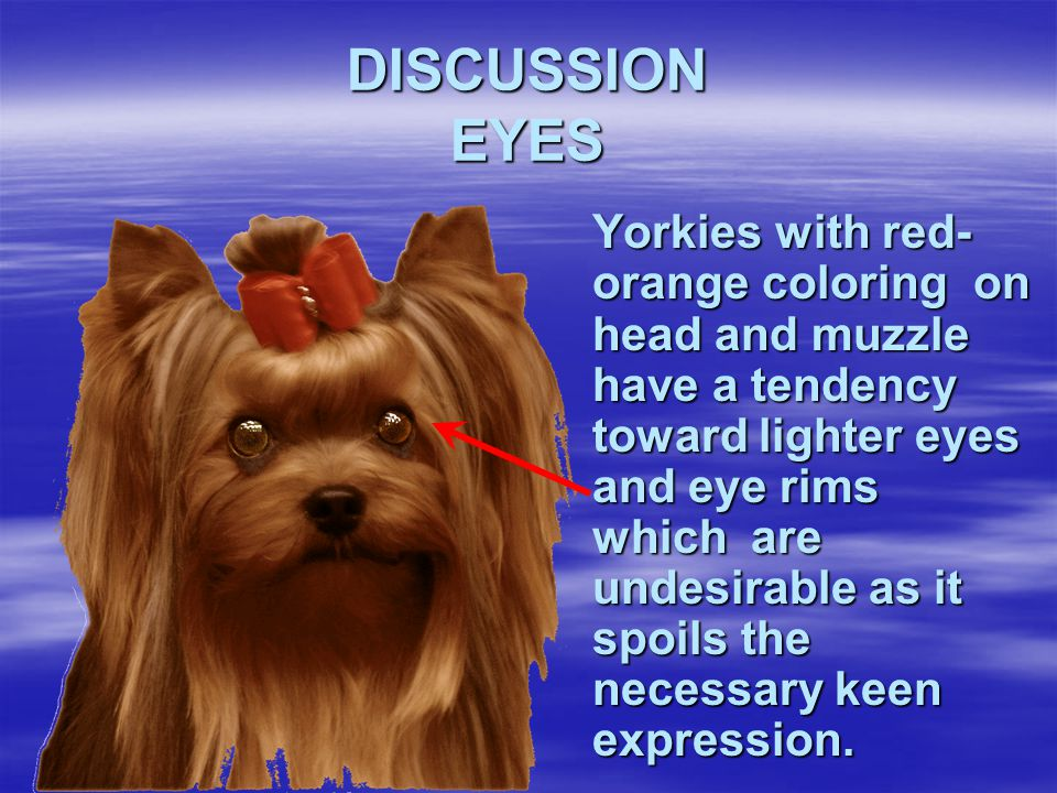 DISCUSSION EYES
