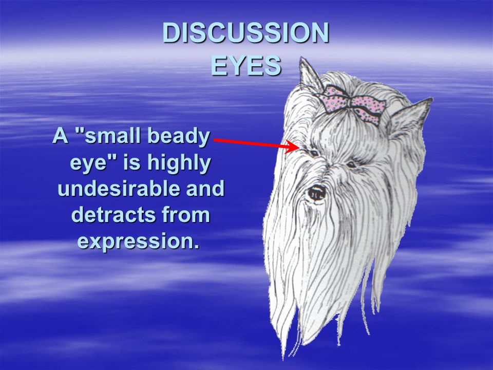 DISCUSSION EYES A small beady eye is highly undesirable and detracts from expression.