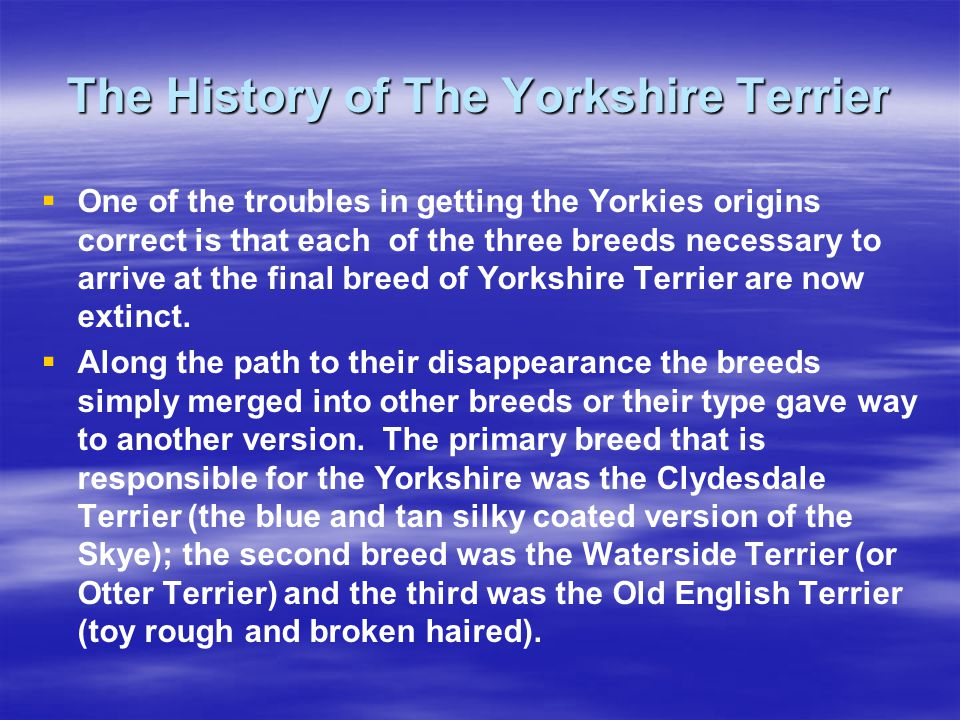 The History of The Yorkshire Terrier