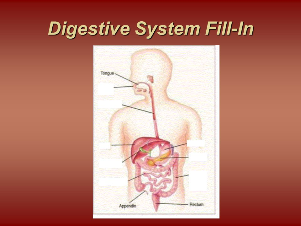 Digestive System Fill-In
