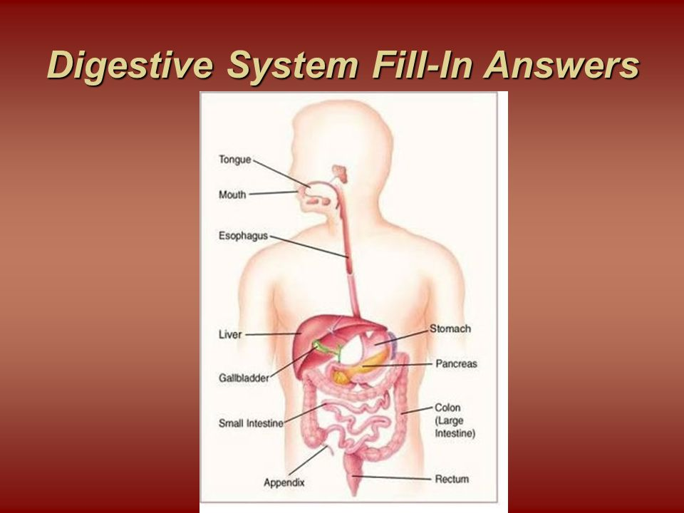 Digestive System Fill-In Answers