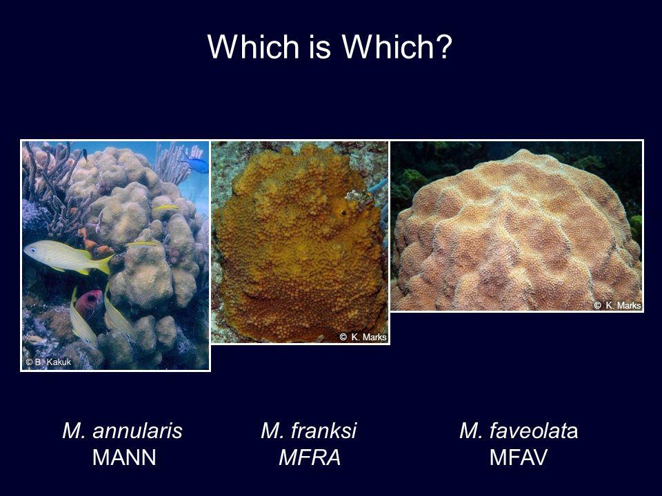 Which is Which M. annularis M. franksi M. faveolata MANN MFRA MFAV