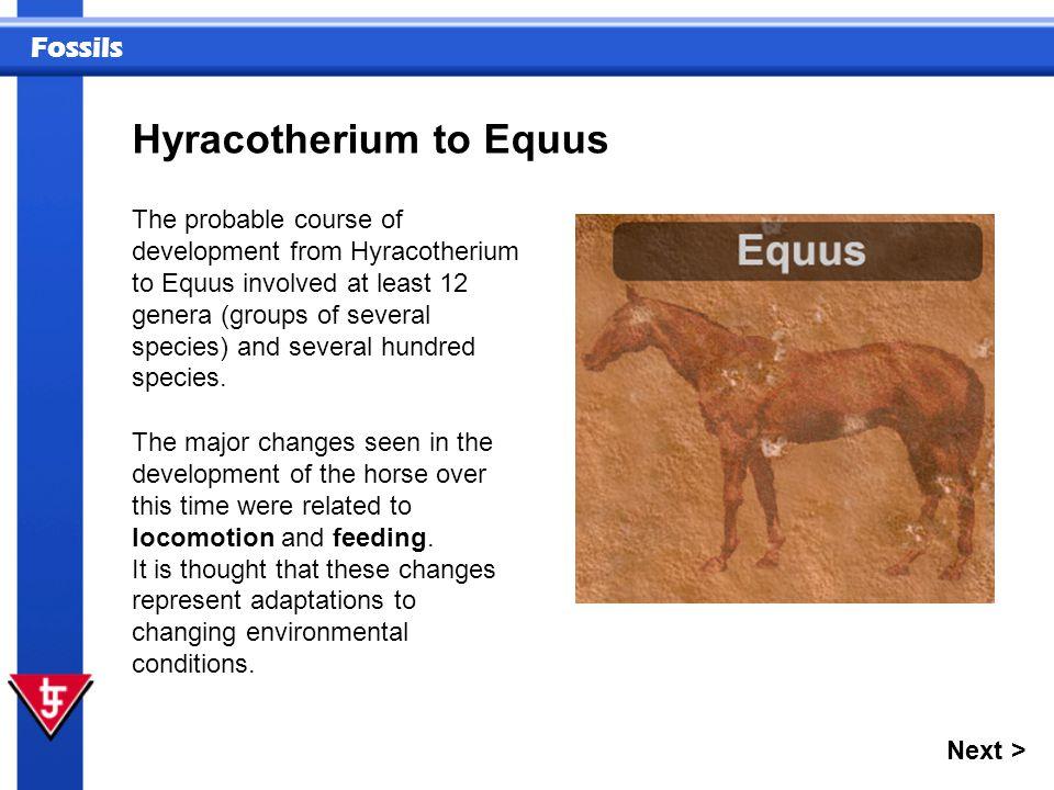 Hyracotherium to Equus