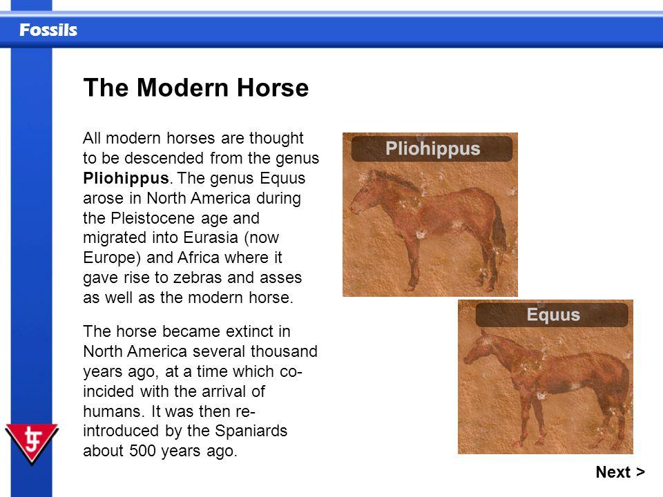 The Modern Horse