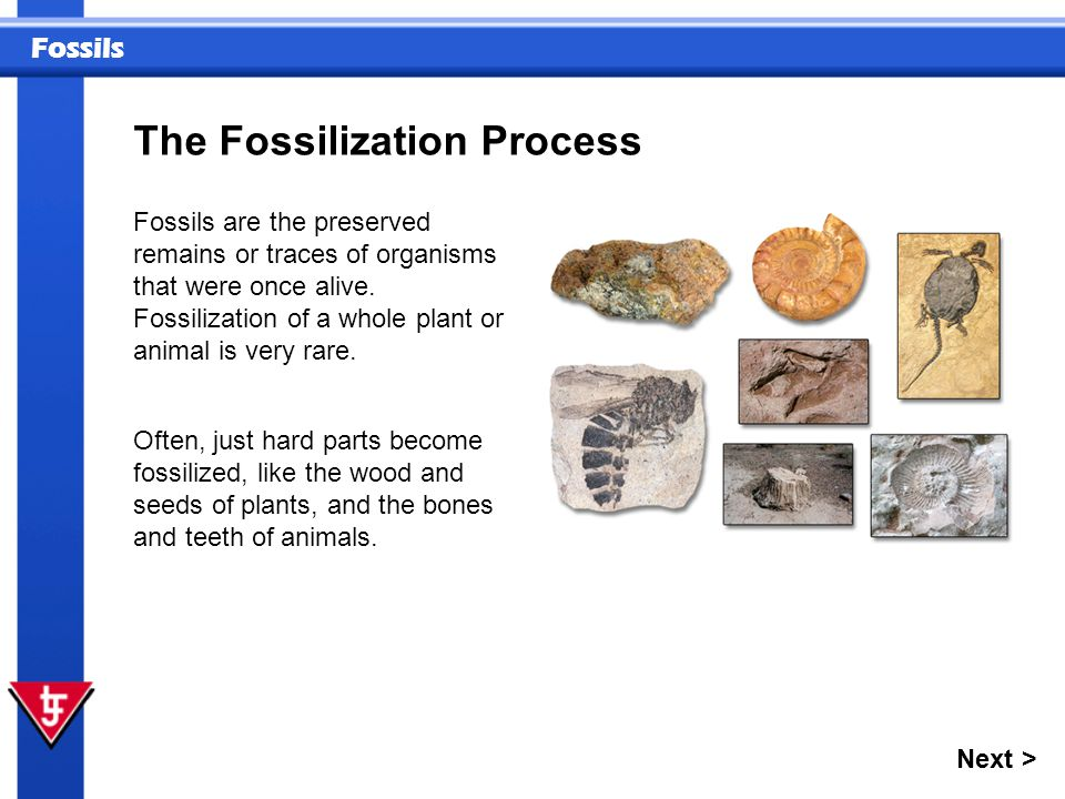The Fossilization Process