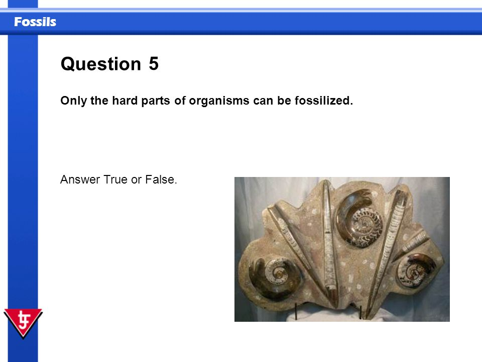 Question 5 Only the hard parts of organisms can be fossilized.