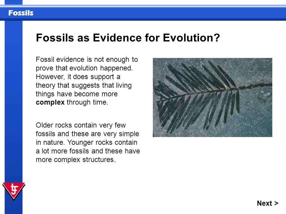 Fossils as Evidence for Evolution