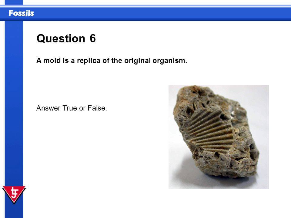 Question 6 A mold is a replica of the original organism.