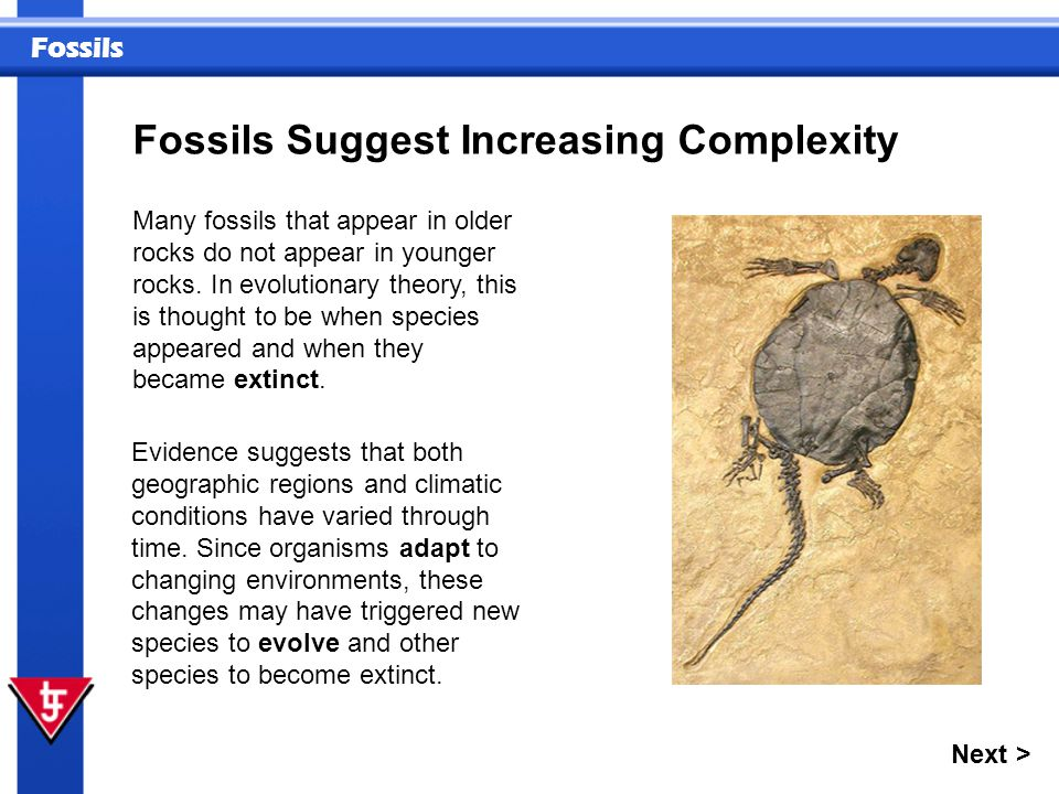 Fossils Suggest Increasing Complexity