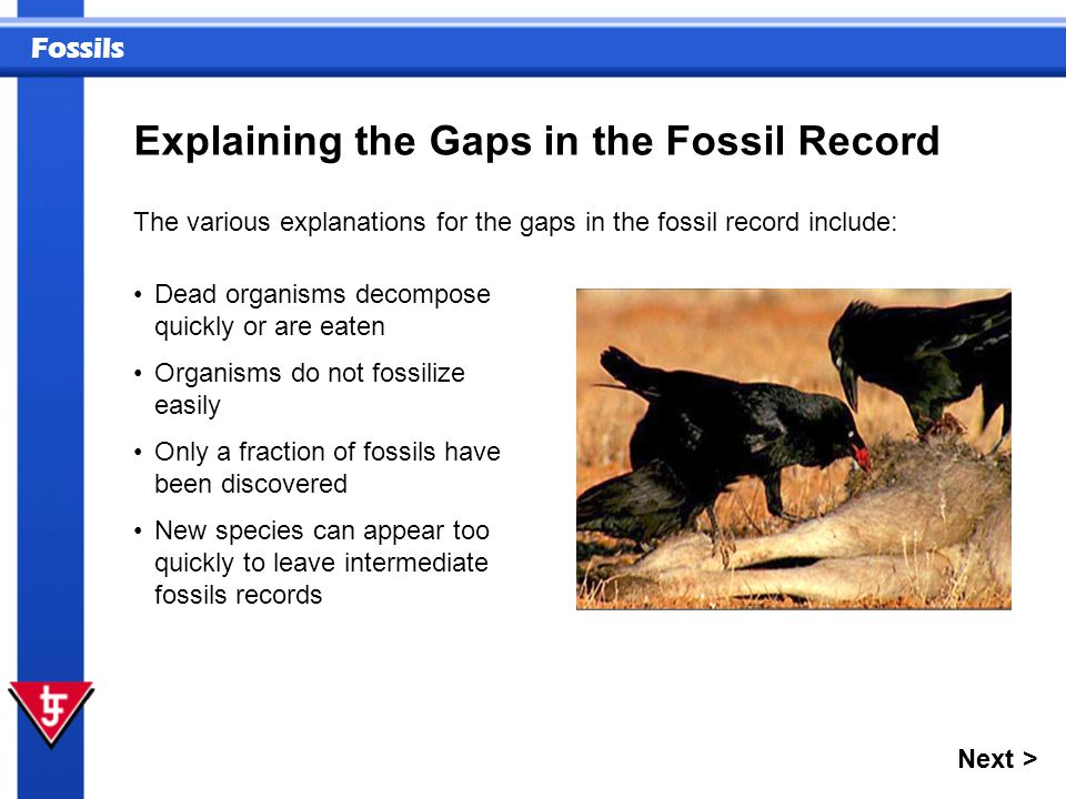 Explaining the Gaps in the Fossil Record