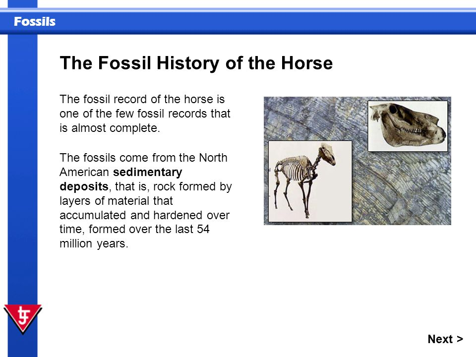 The Fossil History of the Horse
