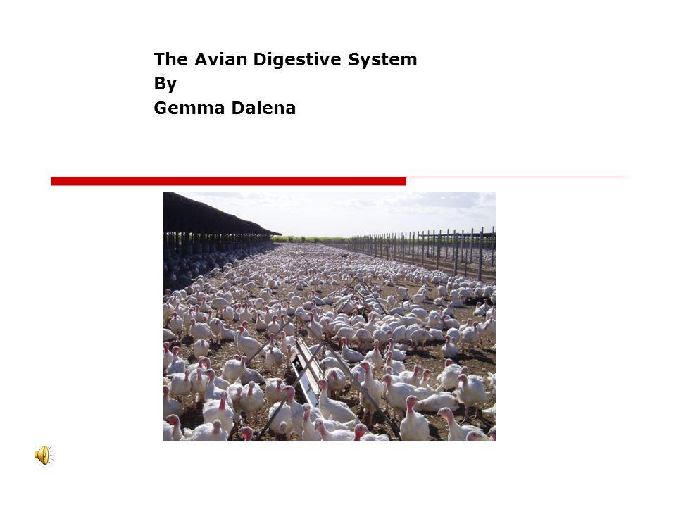 The Avian Digestive System By Gemma Dalena