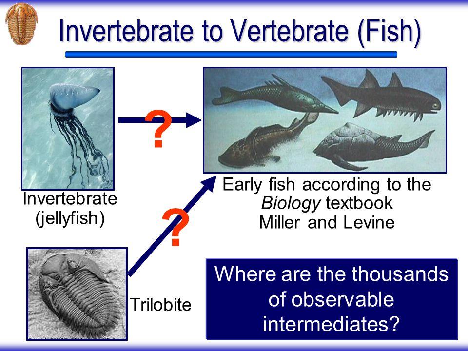 Invertebrate to Vertebrate (Fish)