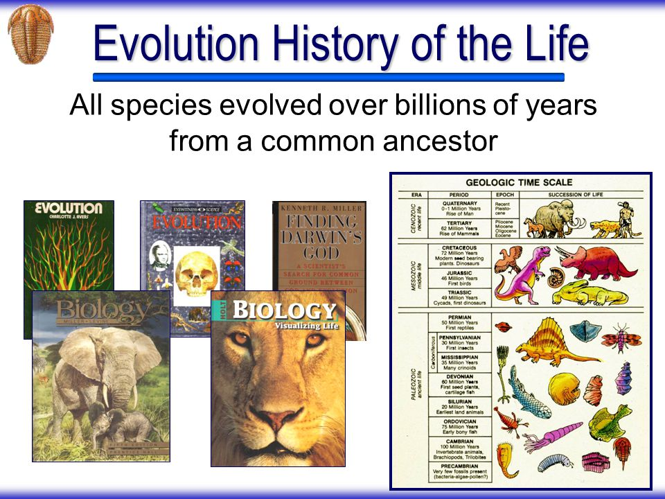Evolution History of the Life