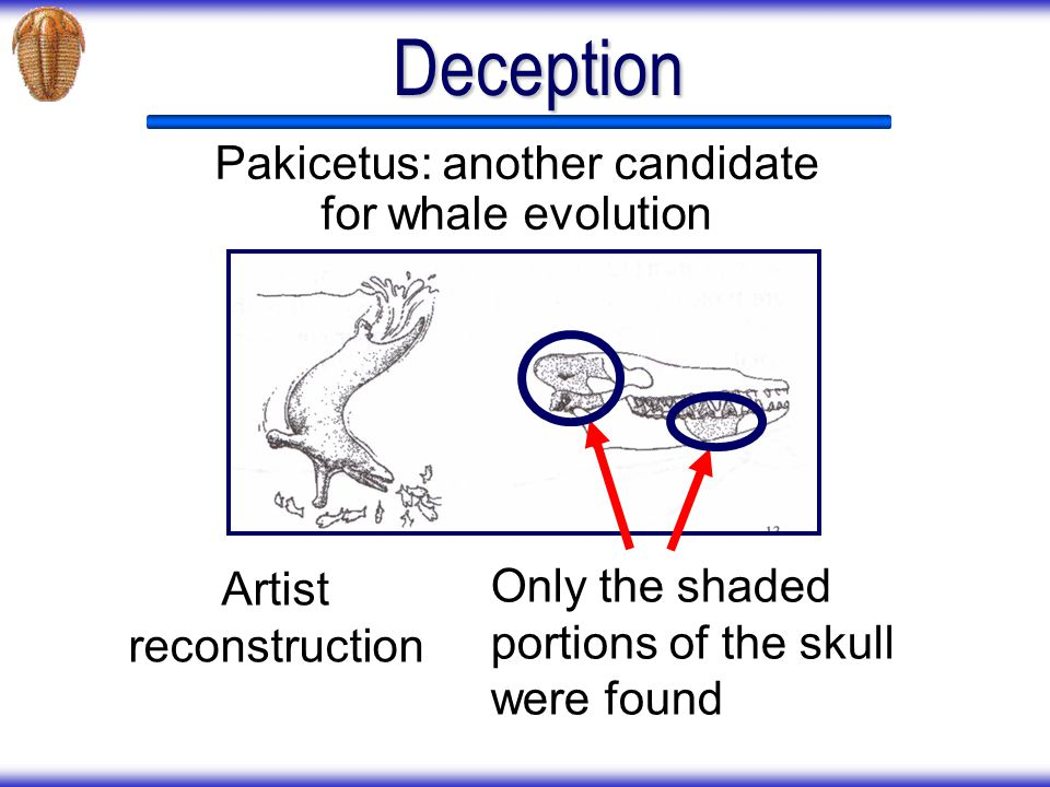 Deception Pakicetus: another candidate for whale evolution