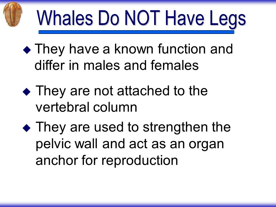 Whales Do NOT Have Legs They have a known function and differ in males and females. They are not attached to the vertebral column.