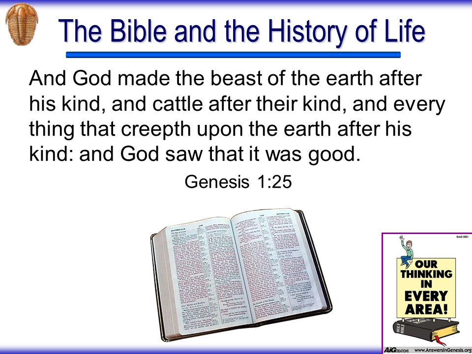 The Bible and the History of Life