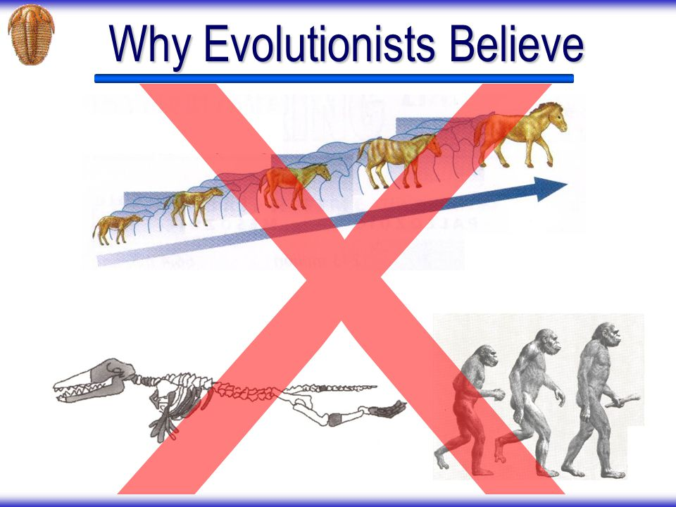 Why Evolutionists Believe