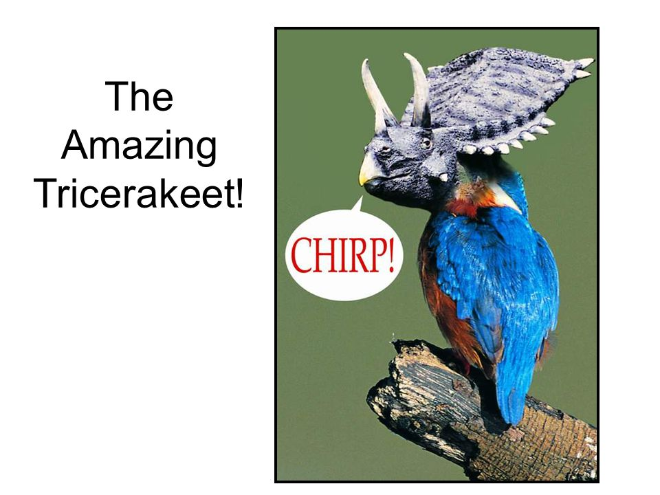 The Amazing Tricerakeet!