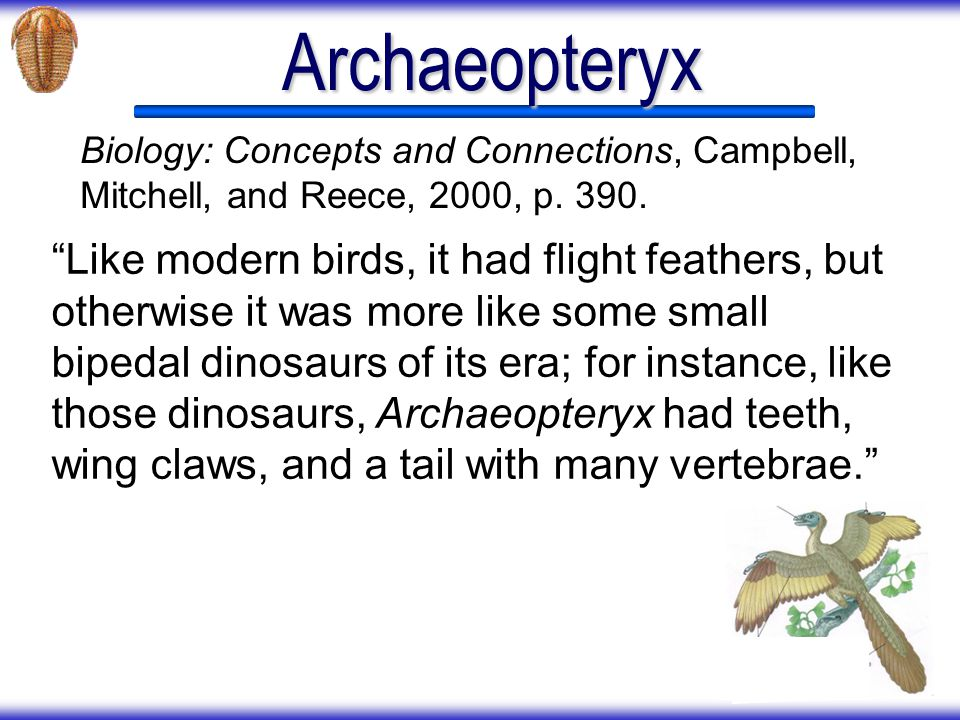 Archaeopteryx Biology: Concepts and Connections, Campbell, Mitchell, and Reece, 2000, p. 390.
