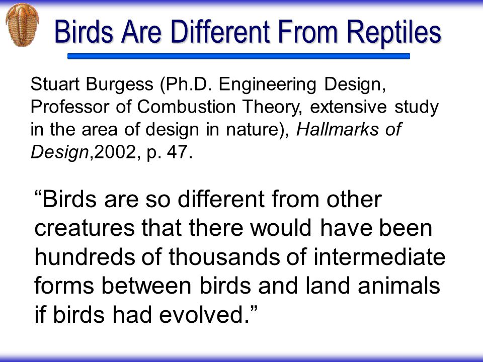 Birds Are Different From Reptiles