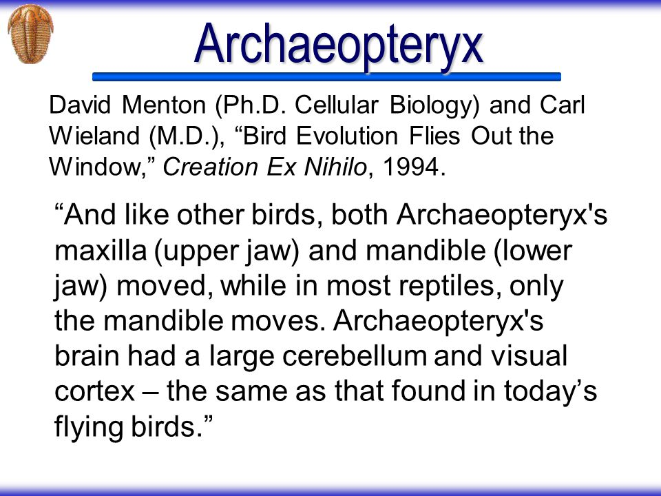 Archaeopteryx David Menton (Ph.D. Cellular Biology) and Carl Wieland (M.D.), Bird Evolution Flies Out the Window, Creation Ex Nihilo,