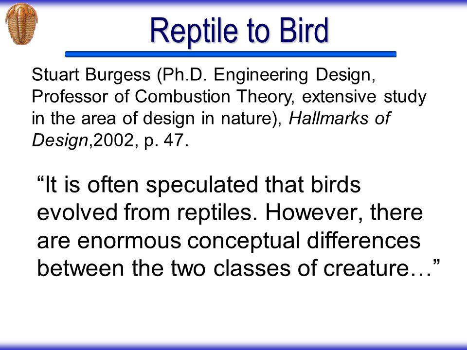 Reptile to Bird