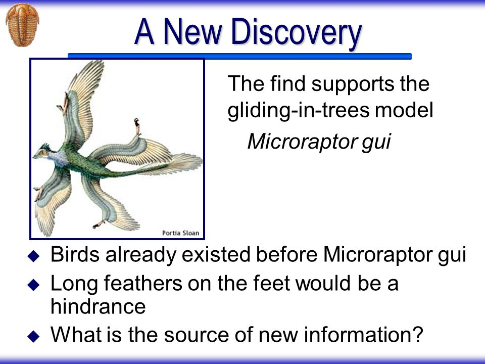A New Discovery The find supports the gliding-in-trees model