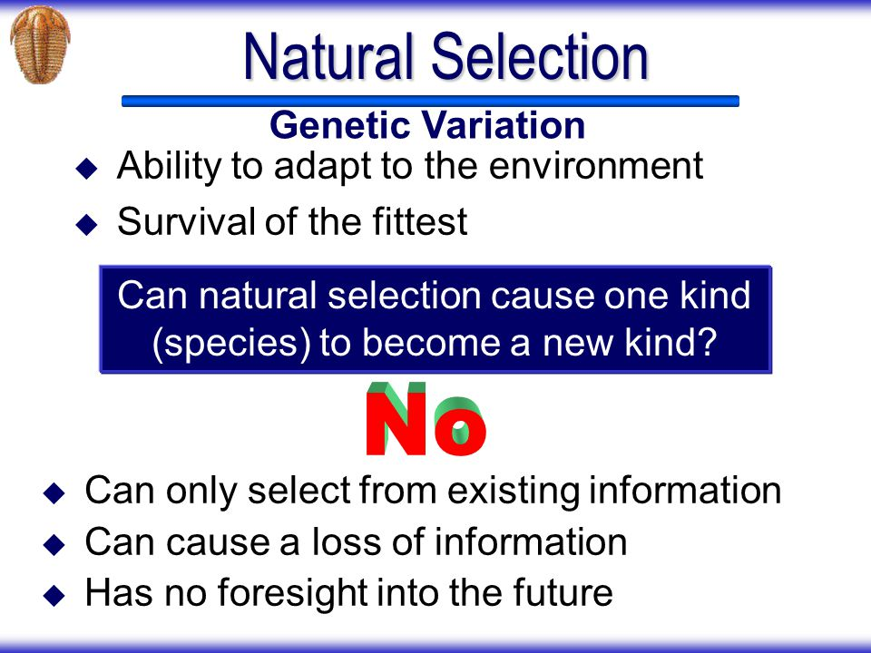 Can natural selection cause one kind (species) to become a new kind