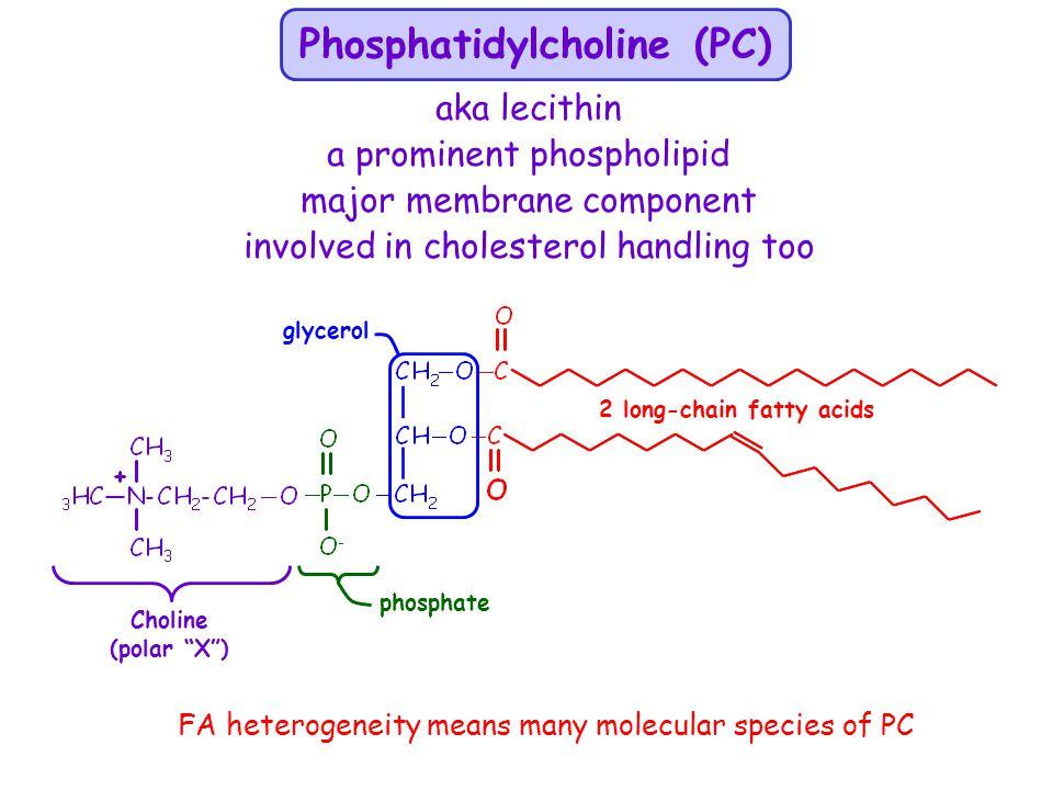 Phosphatidylcholine (PC)