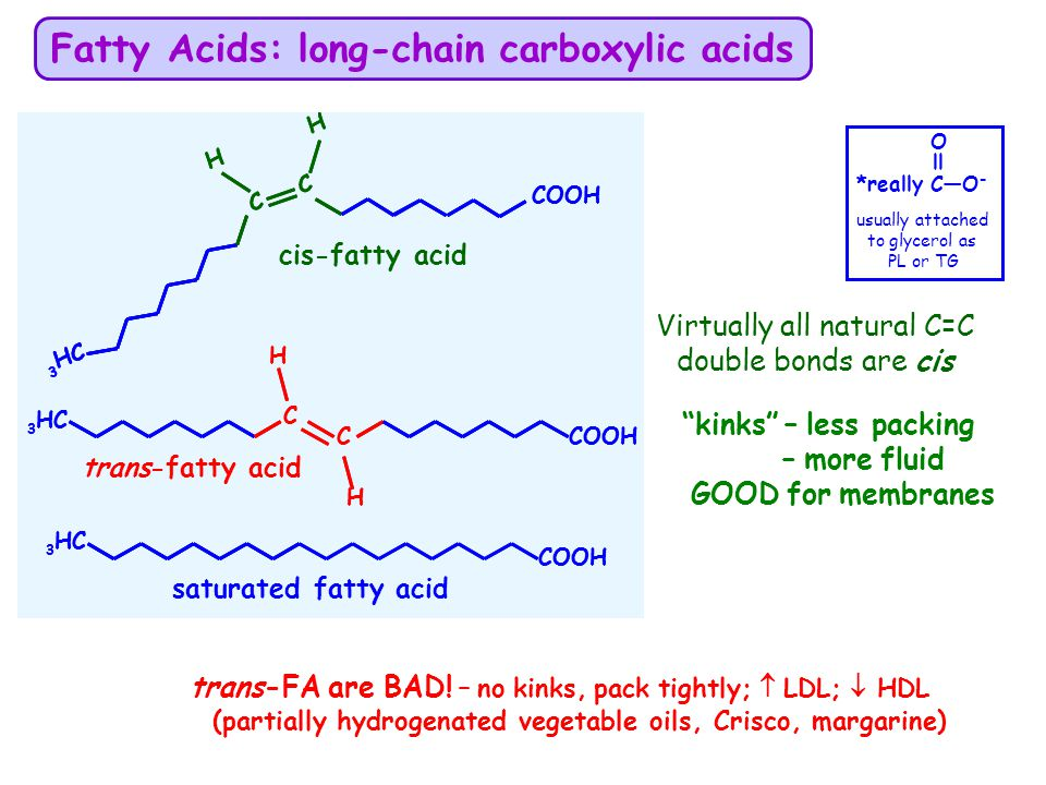 Fatty Acids: long-chain carboxylic acids
