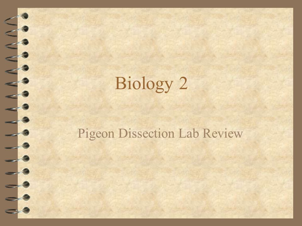 Pigeon Dissection Lab Review