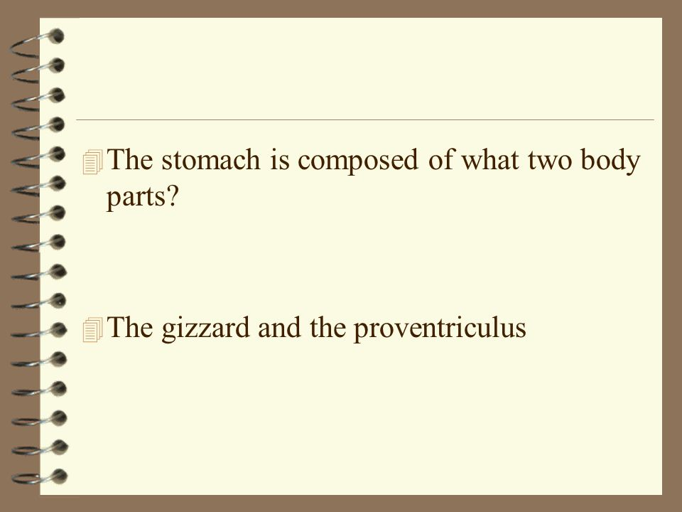 The stomach is composed of what two body parts